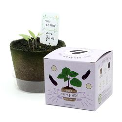 팜팜농장 - 가지 모종키우기