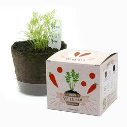 팜팜농장 - 당근 모종키우기