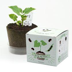 팜팜농장 - 강낭콩 모종키우기