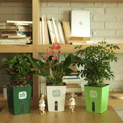 똑똑이 대형화분 공기정화식물
