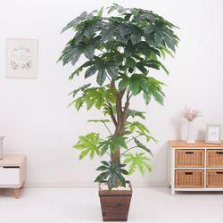 스타트리 210cm 2-2 FREOFT(조화나무)
