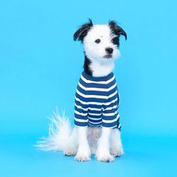 플로트 스트라이프 골지 티셔츠 - 블루