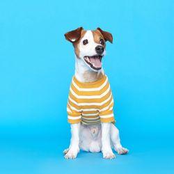플로트 스트라이프 골지 티셔츠 - 옐로우