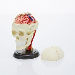 [2만원 이상 구매시 에코백 증정] 3D과학 브레인 인사이드1701730