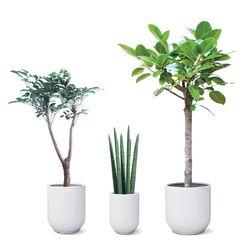 에어케어[인기공기정화식물 대형 3종세트]