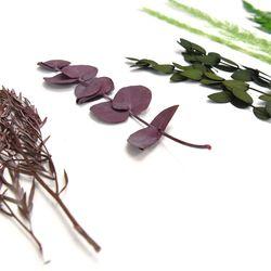 프리저브드 식물 5종 중