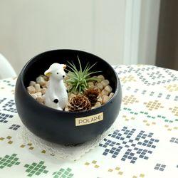 폴라포 편백나무데코 틸란드시아 테라리움 자기양