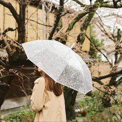 투명 장우산 - 01 nature