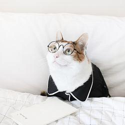 고양이 강아지 선글라스 안경 냥글라스  MIYOPET