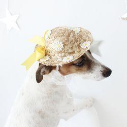 고양이 강아지 여름 밀짚모자 노랑 꽃 모자 MIYOPET
