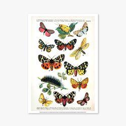 빈티지아트포스터 - Butterfly 0018