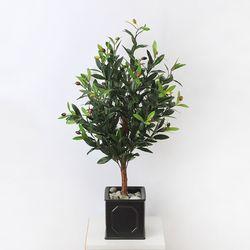 올리브나무(diy상품)