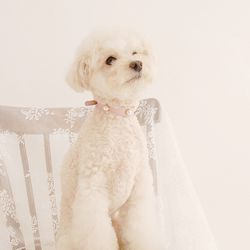 Soft Pearl Collar M Pink