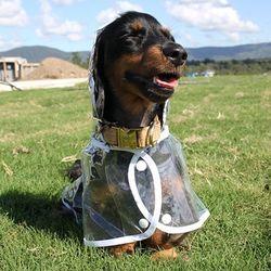 애견 강아지 투명 레인코트 비옷 우비 L