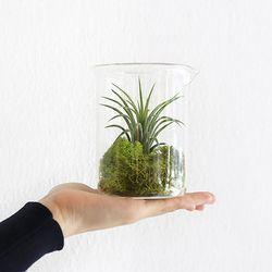 공기정화식물 비이커500ml+모스+이오난사 세트