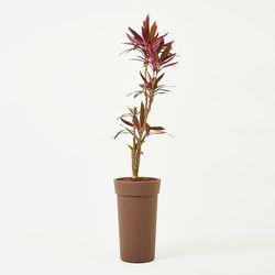 아이차카 Eco Plastic pot 3types