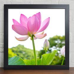 iv105-행운의연꽃세상인테리어액자