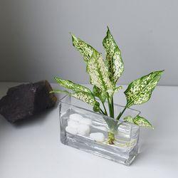 [아글라오네마 수경] 식물 인테리어 (S스퀘어)