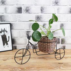 따르릉 - 라탄바구니+공기정화식물