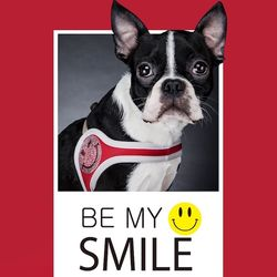 fitdog - SMILE Harness (Red)