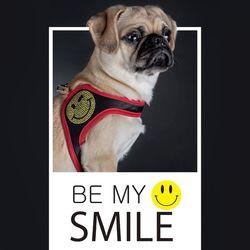 fitdog - SMILE Harness (Black)