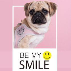 fitdog - SMILE Harness (Pink)