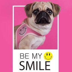 fitdog - SMILE Harness (HotPink)