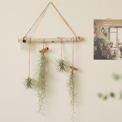 공기정화식물 - 틸란드시아 행잉플랜드set