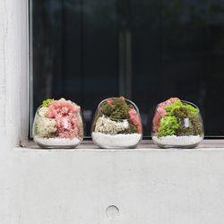 공기정화식물 스칸디아모스 테라리움