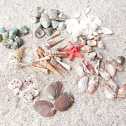 조개껍질 모음