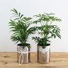 스테인레스 화분 - 공기정화식물