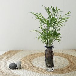 수경식물 - 테이블야자 유리화병set