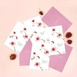 메그놀리아 - Magnolia