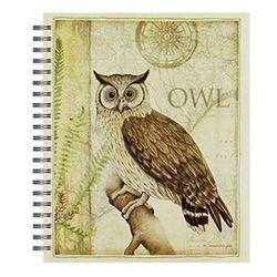 스케치북-Sanctuary Owl