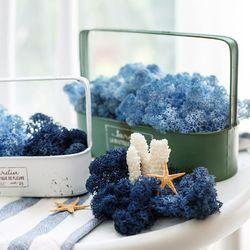 천연이끼 공기정화 식물  블루 스칸디아모스 단품 25gc