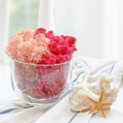천연이끼 공기정화 식물  핑크 스칸디아모스 단품 25gc