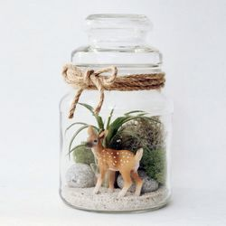 아기사슴 틸란시아