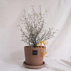 1.실버 코로키아S(식물만)