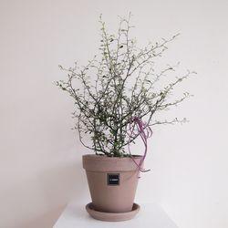 2.그린 코로키아L(식물만)
