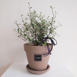 1.그린 코로키아S(식물만)