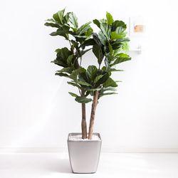 떡갈고무나무 170cm 메탈 5-7 [조화]