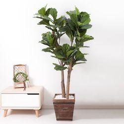 떡갈고무나무 170cm 우드 5-5 [조화]