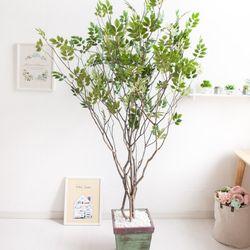 라인-느티나무 210cm 빈티지 5-5 [조화]