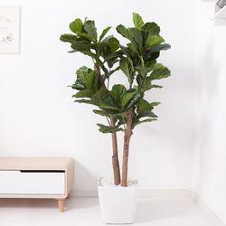떡갈고무나무 170cm 아크릴 5-5 [조화]