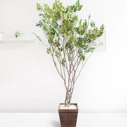 라인-느티나무 210cm 우드 5-5 [조화]