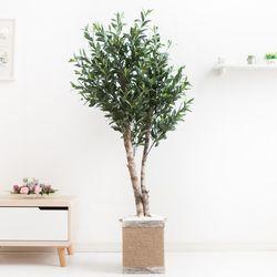 올리브나무 170cm 로프 5-5 [조화]