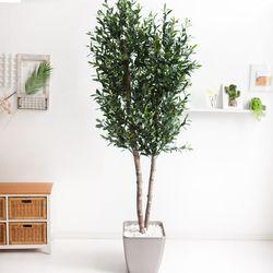 올리브나무 230cm 메탈 5-7 [조화]