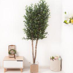올리브나무 230cm 로프 5-5 [조화]