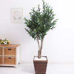올리브나무 170cm 우드 5-5 [조화]