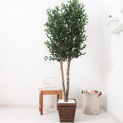 올리브나무 230cm 우드 5-5 [조화]